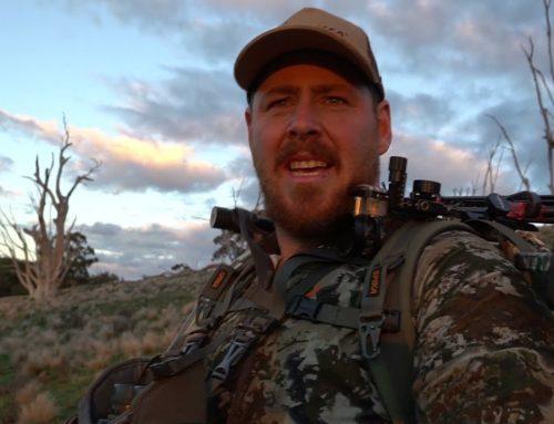 BOWHUNTING AUSTRALIA (HUGE BOAR!! BILLIES AND SPIKER!! DEER FOOTAGE AT END OF VID!)
